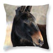 Mule Portrait 2 Throw Pillow