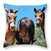 Mules On Alonissos Island Throw Pillow