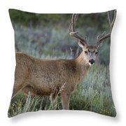 Muley Buck In Velvet Throw Pillow