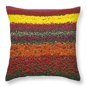 Mult-colored Tulip Field Throw Pillow
