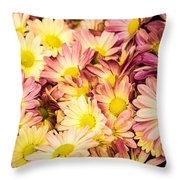 Multi-colored Daisies Throw Pillow