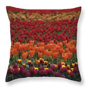 Multi-colored Tulip Fields  Throw Pillow