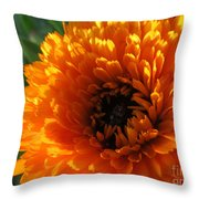 Multi Petals African Daisy Throw Pillow