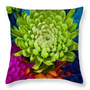Multicolored Chrysanthemums  Throw Pillow