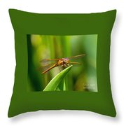 Multicolored Dragonfly Throw Pillow