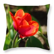 Multicolored Tulip Throw Pillow