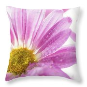 Mums Flowers Against A White Background Throw Pillow