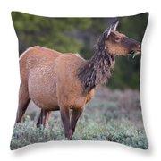 Munching Elk Grand Teton National Park Throw Pillow