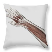 Muscle Anatomy Of Human Arm And Hand Throw Pillow