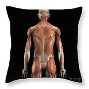 Muscles Of The Upper Body Rear Throw Pillow