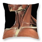 Muscles Of The Upper Chest And Neck Throw Pillow