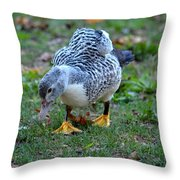 Muscovy 14-6 Throw Pillow