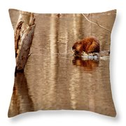 Muskrat In Flooded Waters Throw Pillow