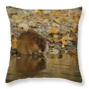 Muskrat Reflection Throw Pillow
