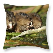 Muskrat Trio Throw Pillow