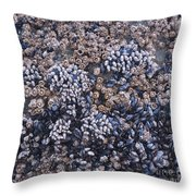 Mussels And Barnacles, Low Tide Throw Pillow