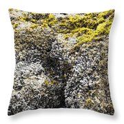Mussels Barnacles Seaweed Closeup Throw Pillow