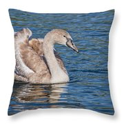 Mute Swan Cygnet Throw Pillow