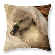 Mute Swan Cygnet Under Wing Throw Pillow