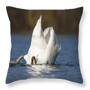Mute Swan Dabbling Bavaria Throw Pillow