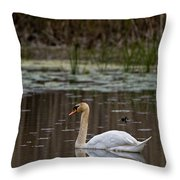 Mute Swan Pictures 143 Throw Pillow