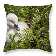 Mute Swan Pictures 210 Throw Pillow