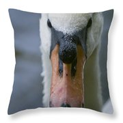 Mute Swan Pictures 88 Throw Pillow