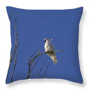 My Sulphur Crested Cockatoo Visiting Throw Pillow