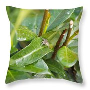 My Web-site Throw Pillow