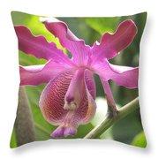 Myrmecophila Orchid Throw Pillow