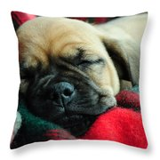 Nap Time Throw Pillow by Lisa Phillips