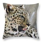 Naples Zoo - Leopard Relaxing 1 Throw Pillow