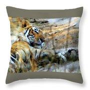 Naptime For A Bengal Tiger Throw Pillow