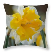 Narcissus 014-2 Throw Pillow
