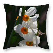 Narcissus Evening Glow Throw Pillow