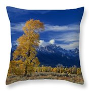 Narrowleaf Cottonwoods Fall Color Teton Throw Pillow