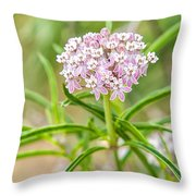 Narrowleaf Milkweed Throw Pillow