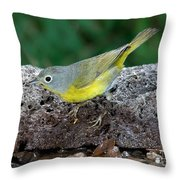 Nashville Warbler Vermivora Ruficapilla Throw Pillow