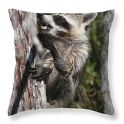 Nasty Raccoon In A Tree Throw Pillow