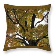 Natural Sunburst Through Autumn Tree Throw Pillow