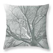 nature - art - Winter Sun  Throw Pillow