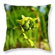 Nature Green Fern Frond Unfolding Art Prints Ferns Throw Pillow
