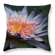 Nature's Baroque Throw Pillow