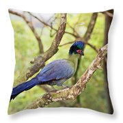Natures Beauty Throw Pillow by Aimee L Maher Photography and Art Visit ALMGallerydotcom