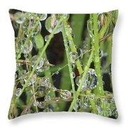 Natures Diamonds Throw Pillow