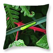 Nature's Highway Throw Pillow
