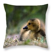 Nature's Lil Wonder Throw Pillow by Skip Willits