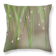 Nature's Soft Reflections Throw Pillow
