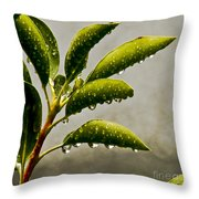 Natures Teardrops Throw Pillow