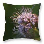 Natures Treasures Throw Pillow